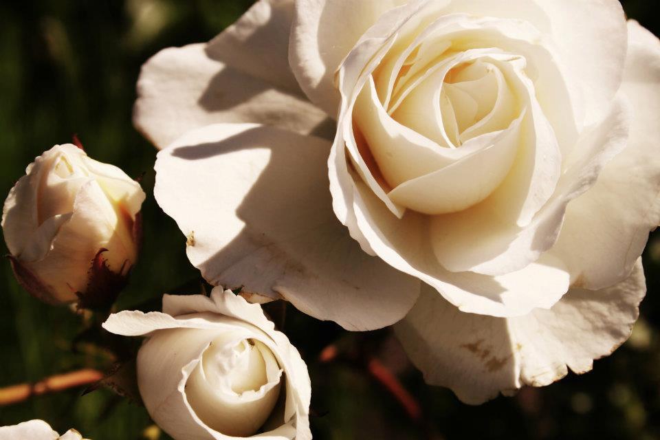Flores de Colombia, las segundas del mundo más exportadas