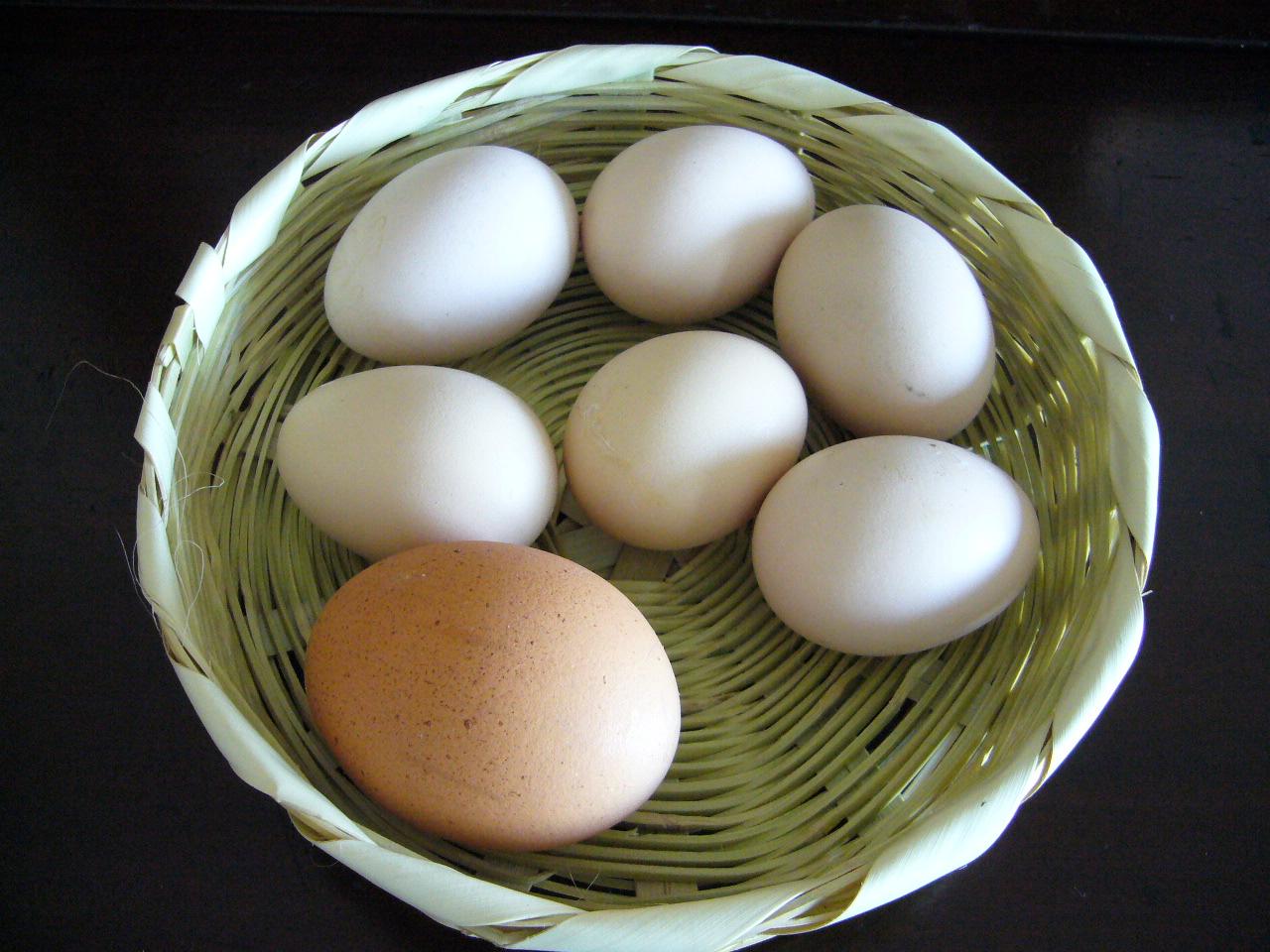 Huevos líquidos, la nueva apuesta de la avicultura