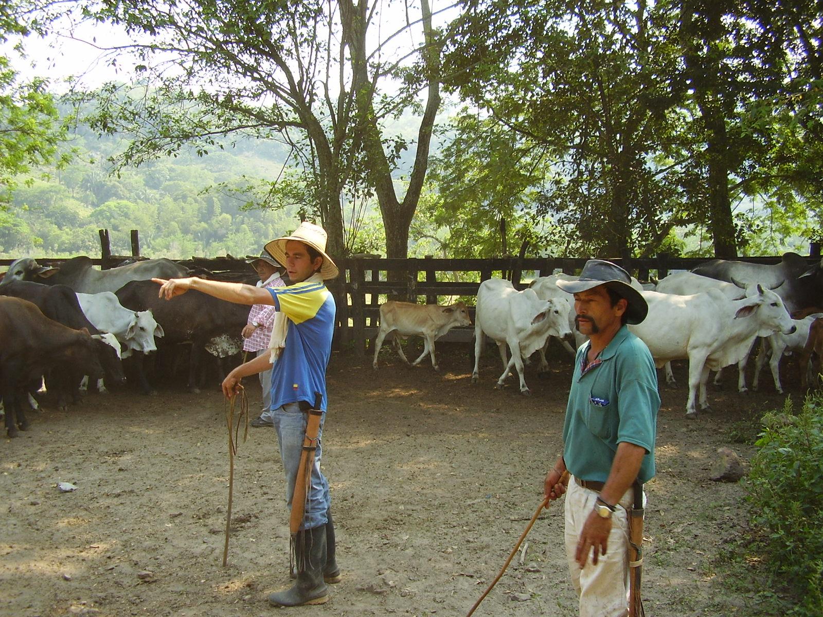 Ganaderos del departamento del Tolima