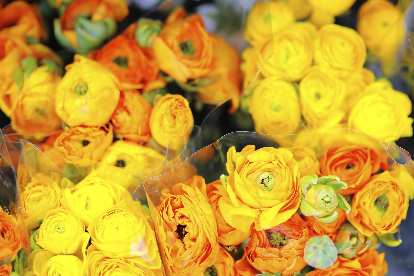 Exportaciones de flores, salvarían la caída de las ventas externas del petróleo.