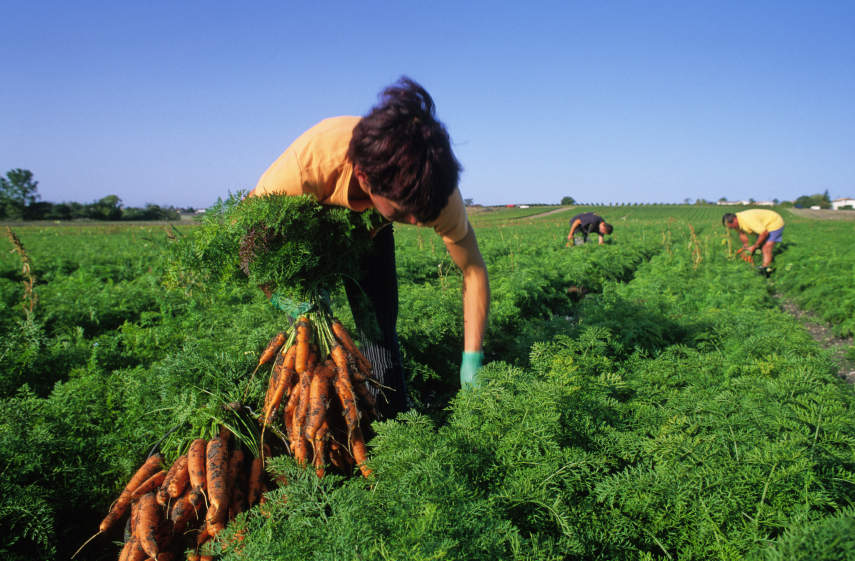 Créditos y subsidios agropecuarios