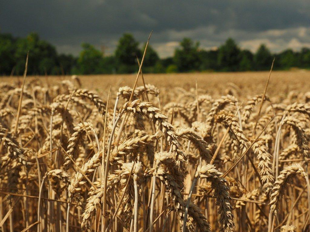 Sector Cerealista