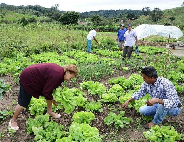 agroecológico