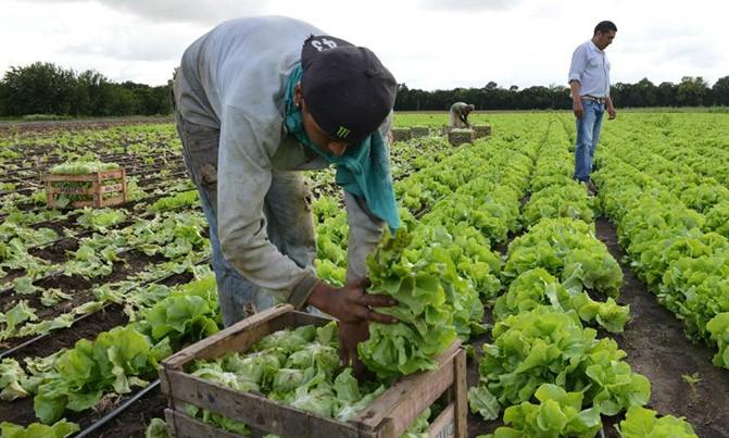 La horticultura, un conjunto de saberes para la producción de hortalizas