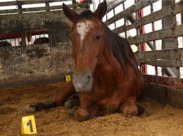 Adopta un caballo, la apuesta de Antioquia para erradicar vehículos de tracción animal