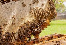 Las abejas, importantes polinizadores para los ecosistemas